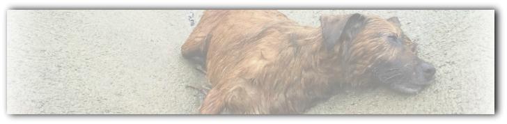 HALLAZGO DE CADÁVERES DE ANIMALES DOMÉSTICOS: De la omisión del deber de perseguir delitos