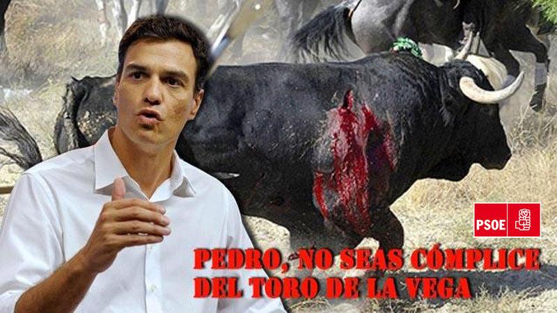 Firmas en change.org: Pedro Sánchez, expulsa del PSOE al alcalde de Tordesillas si no suprime el toro de la Vega