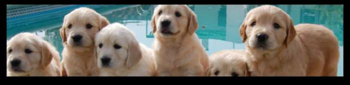 Sancionan con 3.001 euros la cría y venta de mascotas entre particulares