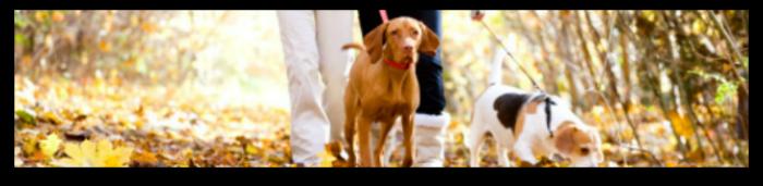 Nueva O.M. en Vitoria obliga a pasear a los perros, al menos, media hora